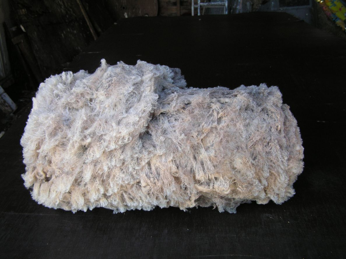 Shetland fleece, rolled and ready for the wool bag.